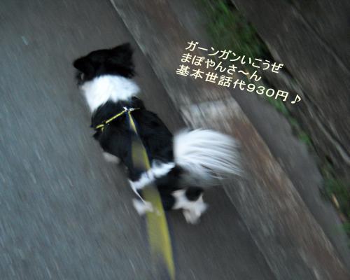 散歩さいこー