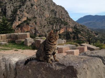 孤高のギリシャ猫