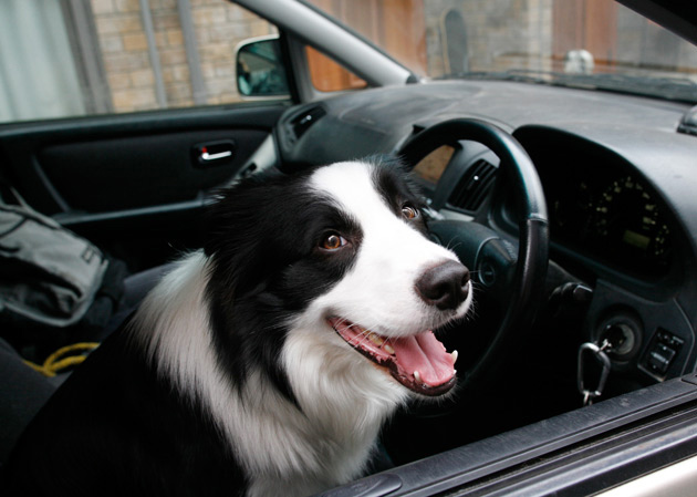 ジュウの運転手3