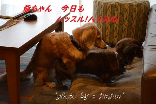 0072_20131229145246a2e.jpg