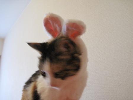 IMG_fuku4336.jpg
