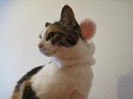 IMG_fuku4342.jpg