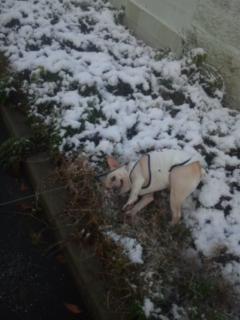雪でゴロゴロ