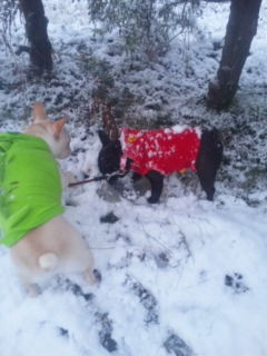 雪まみれ1