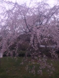 花緑公園8