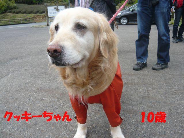 クッキー10歳