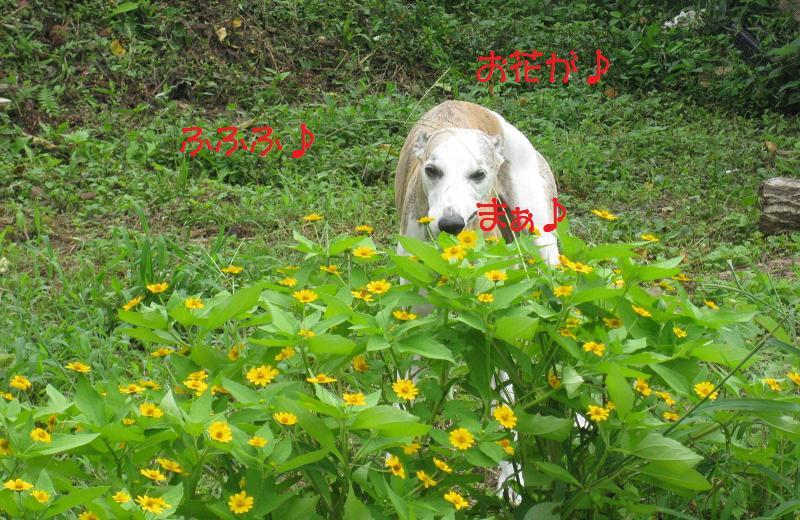 まぁ♪お花が♪