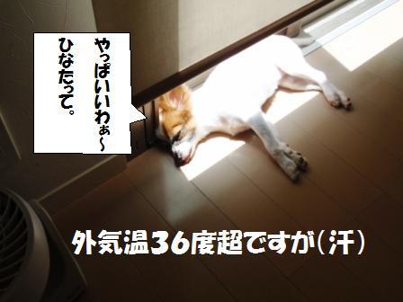 11-100704027.jpg