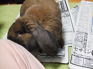 新聞大好きとじおさん3