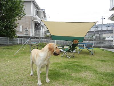 たーぷと犬