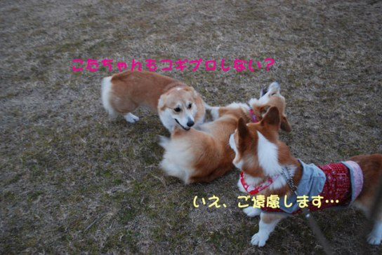 2011_0214_11.jpg