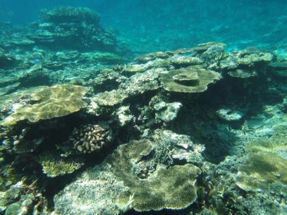 ヤビジのサンゴ(2)