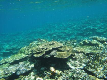 ヤビジのサンゴ(4)