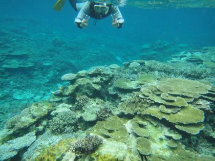 ヤビジのサンゴ(6)