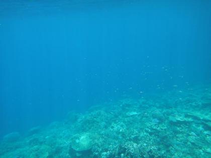 ヤビジのサンゴ(7)