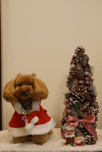マリンちゃんのクリスマス