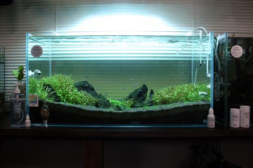 店内レイアウト水槽、ネイチャーアクアリウム 展示水槽 岐阜熱帯魚水草販売Grow aquarium