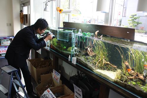 咲楽掲載用画像撮影中 岐阜熱帯魚水草販売Grow aquarium