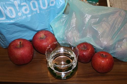 りんごの差し入れ なんとお二方より 岐阜熱帯魚水草販売Grow aquarium