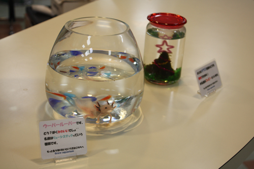 岐阜スイミングスクール 水槽の出張メンテナンス 受付 ウーパールーパー 展示水槽岐阜熱帯魚水草販売Grow aquarium