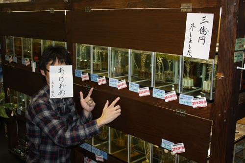 耳が取れちゃいました。と笑いながら今日は帰って行きました。色々20㌫オフ!!です。沢山あります。岐阜熱帯魚水草販売Grow aquarium