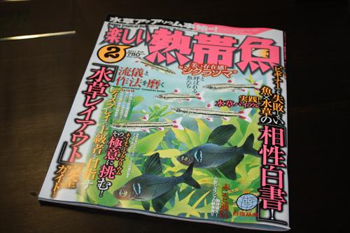 楽しい熱帯魚 岐阜熱帯魚水草販売Grow aquarium
