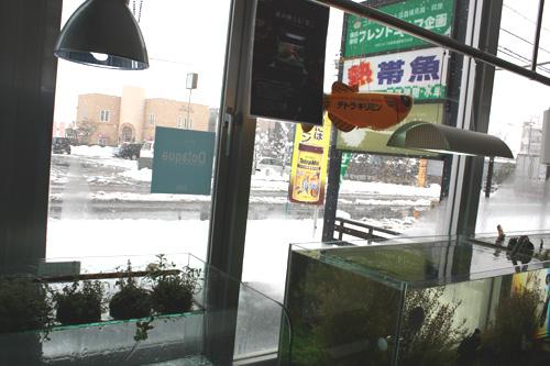 久しぶりに大雪 岐阜熱帯魚水草販売Grow aquarium