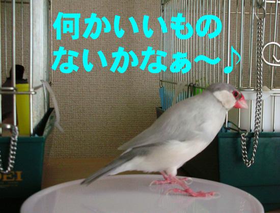 鈴(^_^;)