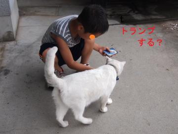 035_convert_20110804090810.jpg