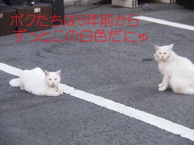 343_convert_20110915151322.jpg