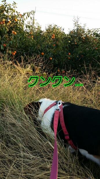 picsay-1414411340.jpg