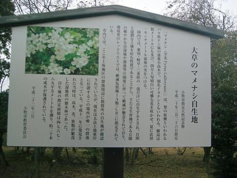 悠々広場:マメナシの木 自生地...
