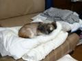 愛犬:2013.11.16