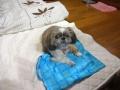 愛犬:2013.11.28