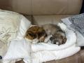 愛犬愛猫:2013.11.16
