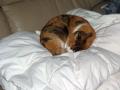 愛猫:2013.11.17