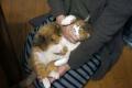 愛猫:2014.01.11