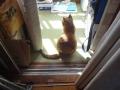 愛猫:2014.11.02