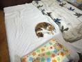 愛猫:2014.10.14