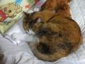 愛猫:2014.10.24