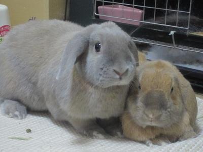 ウサギ達2・・・
