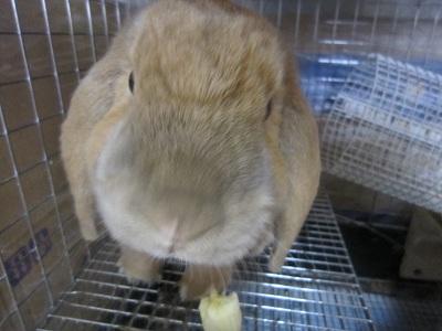 バナナを食す・・・