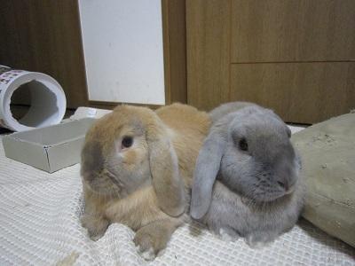 ウサギ達・・・