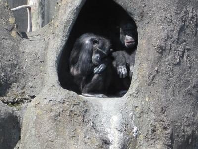 チンパンジーか何か・・・