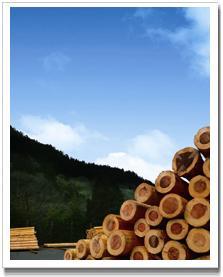木材画像②