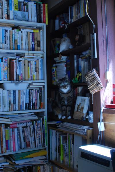 本棚のまめ