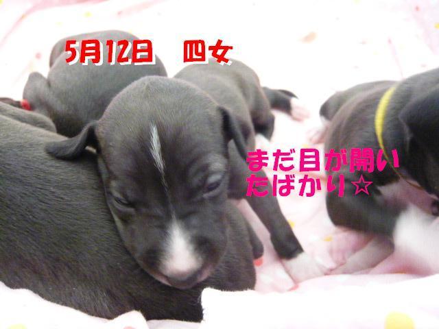蝗帛・ウ_convert_20120519102313