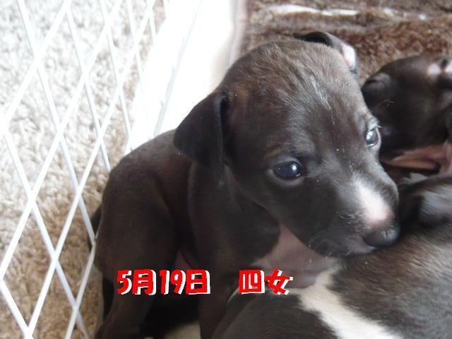 蝗帛・ウ_convert_20120522190025