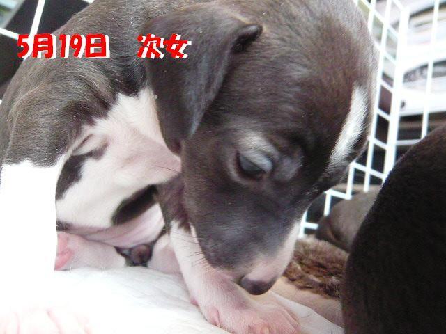 谺。螂ウ_convert_20120522185908