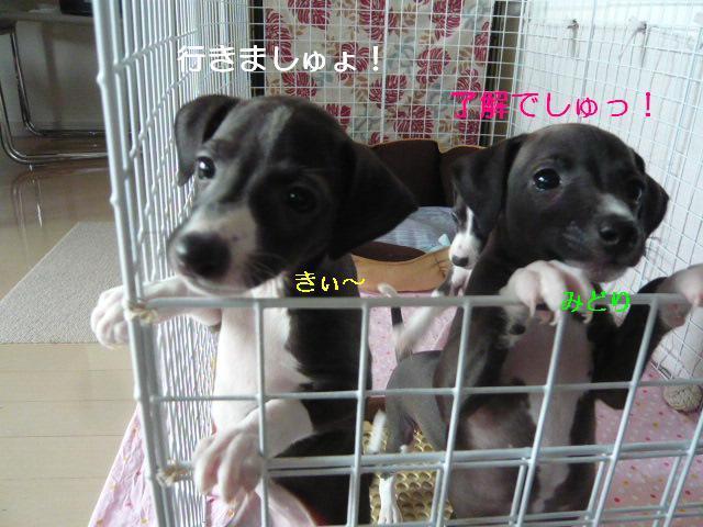 縺阪<繝サ縺ソ縺ゥ繧岩贈_convert_20120606133533